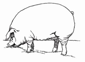 servisitm pig